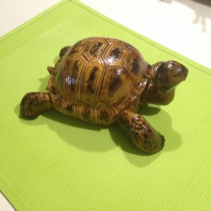 Tortue #27